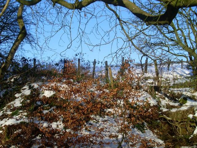 Boundary fence at Killoch Glen