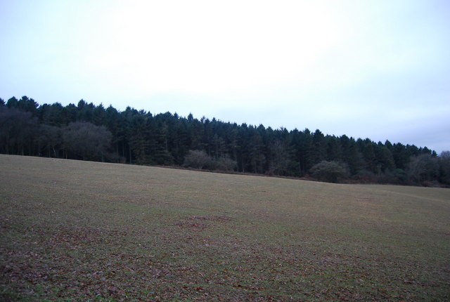 Aller Hill Wood