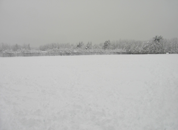 White, grey, open ground