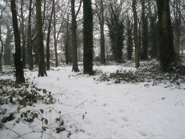 A snowy Battins Copse
