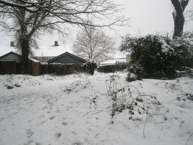 Looking from Battins Copse towards the rear of houses in Battens Way