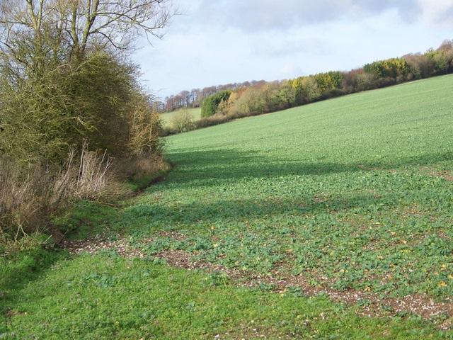 Root crops, Whittonditch
