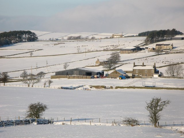 Snowy pastures northeast of Allendale Town