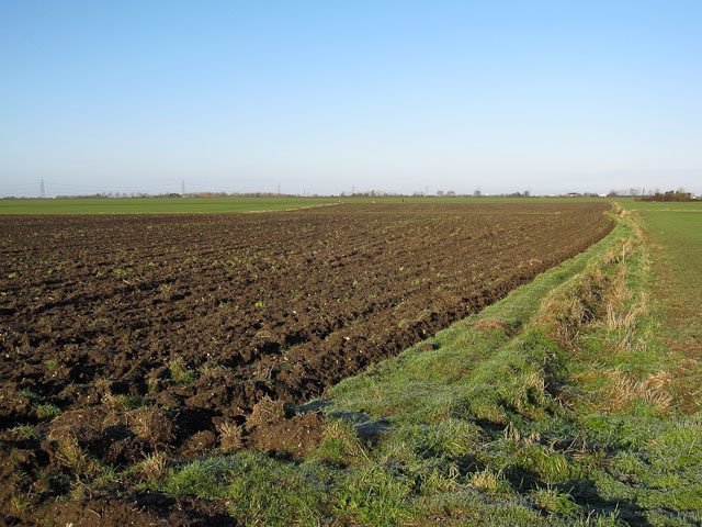 Field off Bancroft Drove