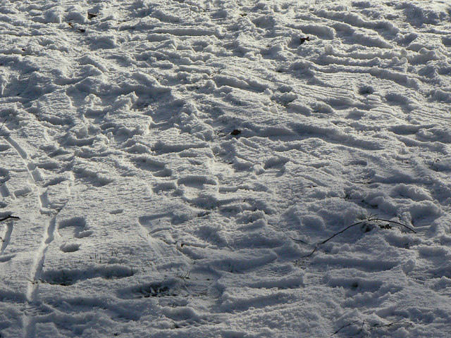 Footprints in the park