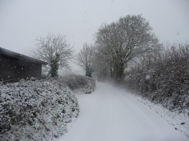 Mid Devon : Country Road & Hedgerows