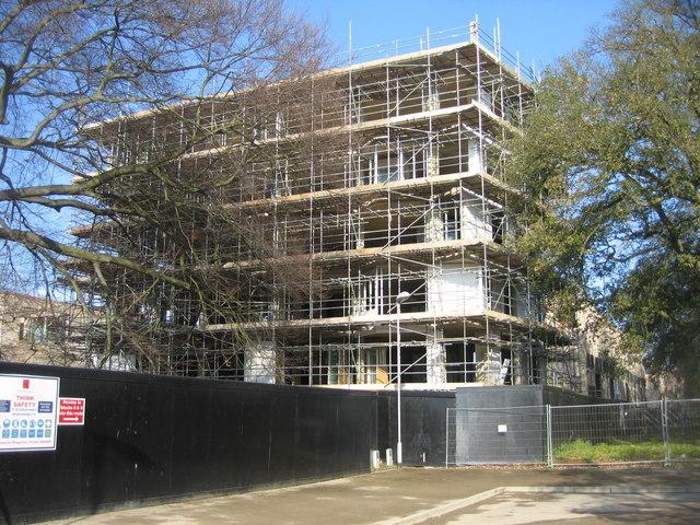 A scaffold nest