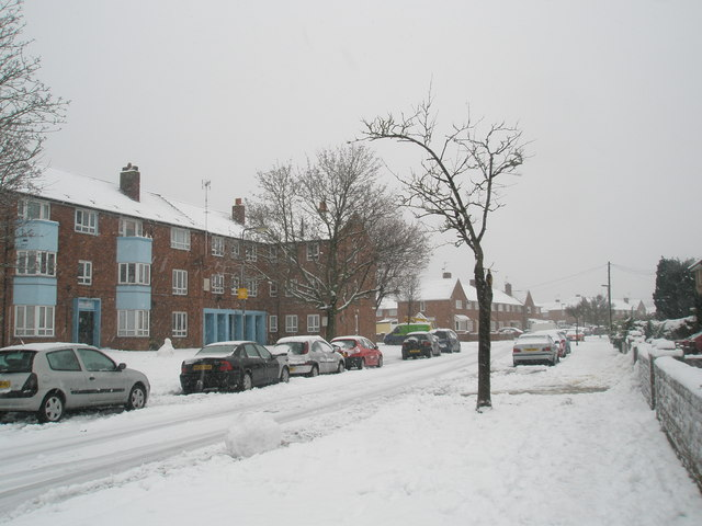 Winter trees in Blendworth Crescent