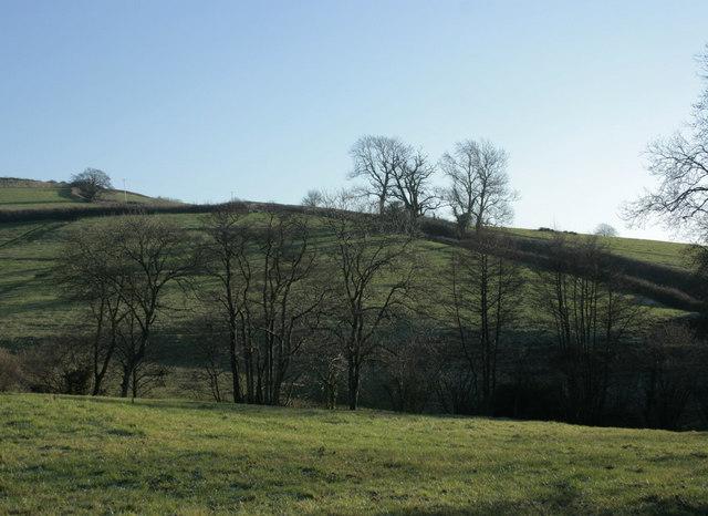 2010 : View of Hall Lane near Lilliput Farm