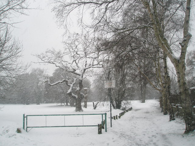 Gnarled tree within a snowy Stockheath Common