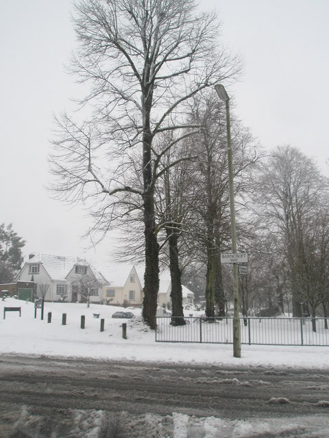 Winter trees in Barncroft Way