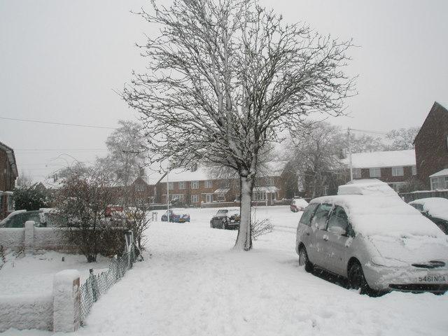 Winter trees in Woodgreen Avenue
