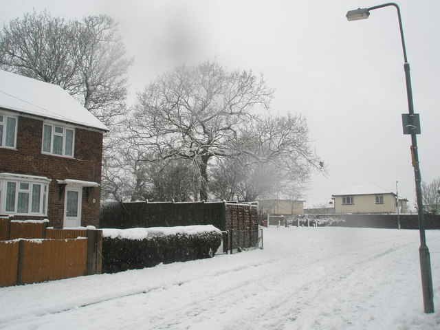 Winter trees in Harestock Road