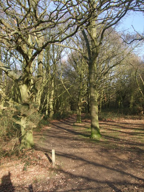 Path through Hainault Forest Country Park (1)