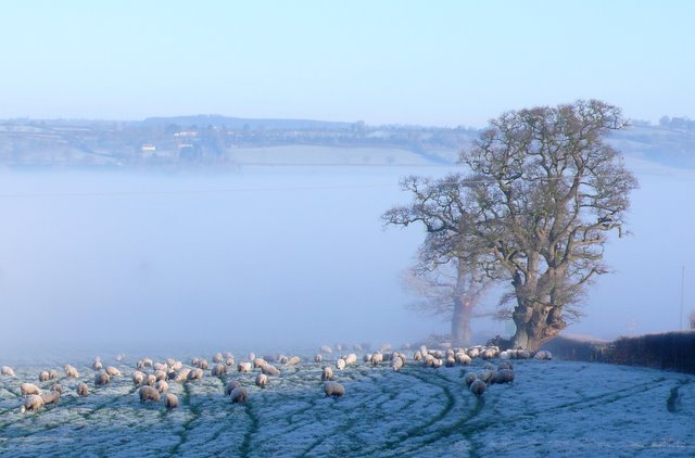 Sheep in the Misty Vale