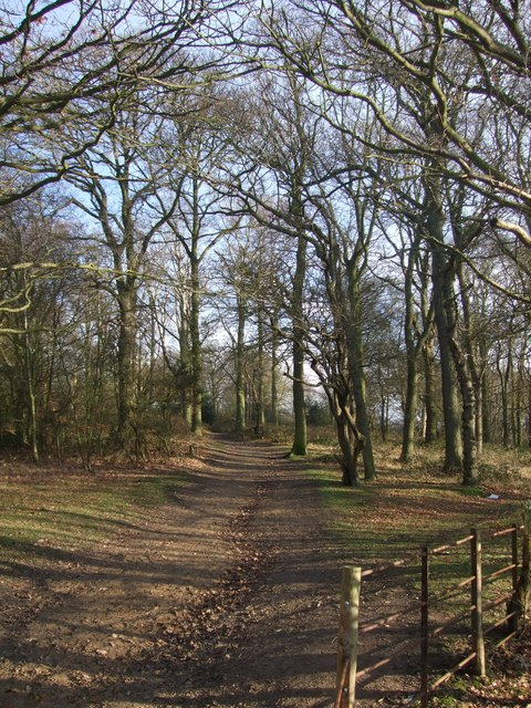 Path through Hainault Forest Country Park (2)