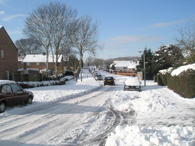 Winter trees in Scratchface Lane
