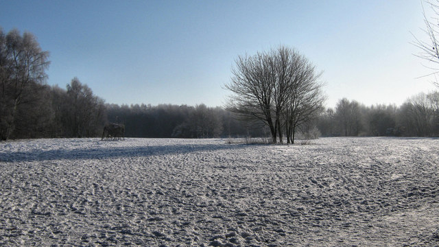 Snow on the meadow