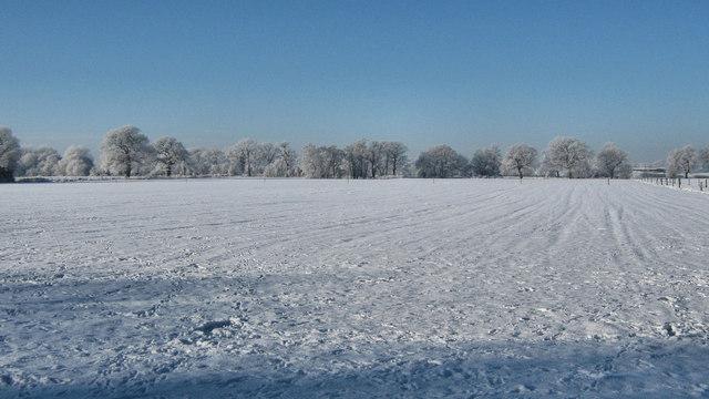 Field at Brereton Heath