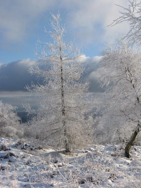Tree on the Wrekin