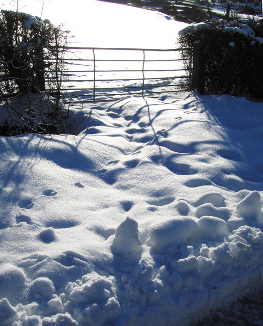 Gate and snow