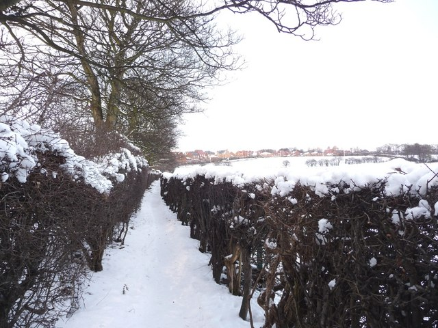 Snowy footpath, with 'new' houses on the horizon