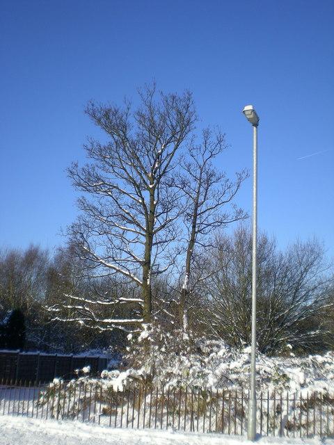 A tree and a street light