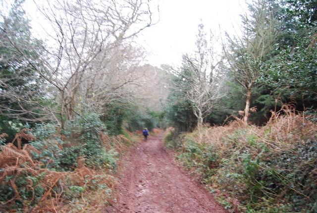 Mill Lane towards Carhampton