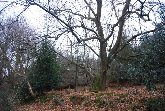 Trees by Mill Lane
