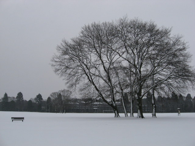 Bench and tree; Tredegar Park