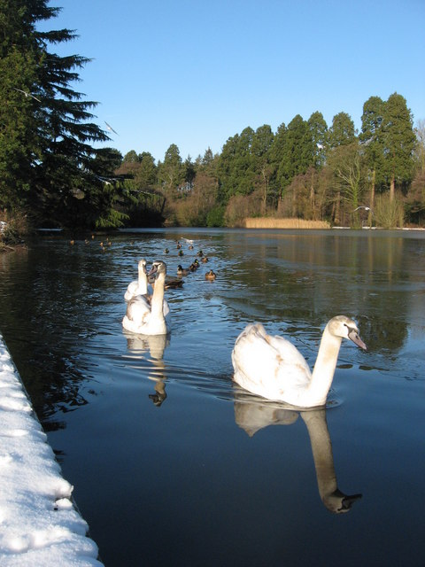 Swans of Tredegar House