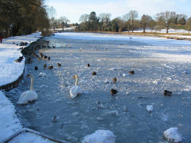 Frozen pool at Abbey Fields