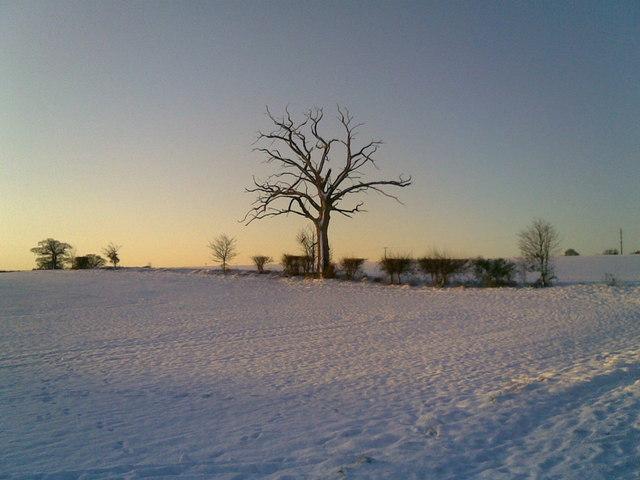 Early Morning near Blackwater Wood