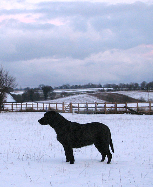 Snow-covered fields south of Surlingham