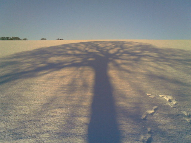 Early Morning Shadow of Tree