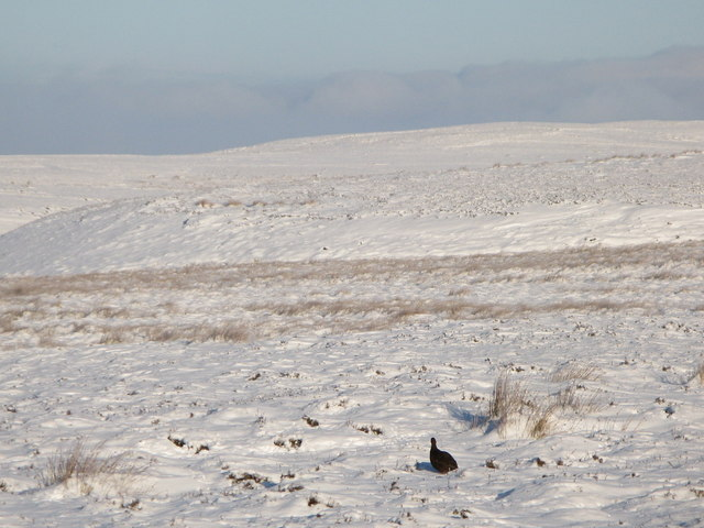 Snowy moorland below Crawberry Hill