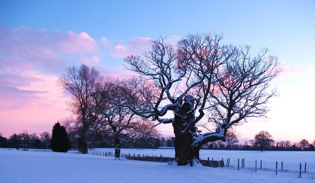 Winter afternoon, Baldersby Park