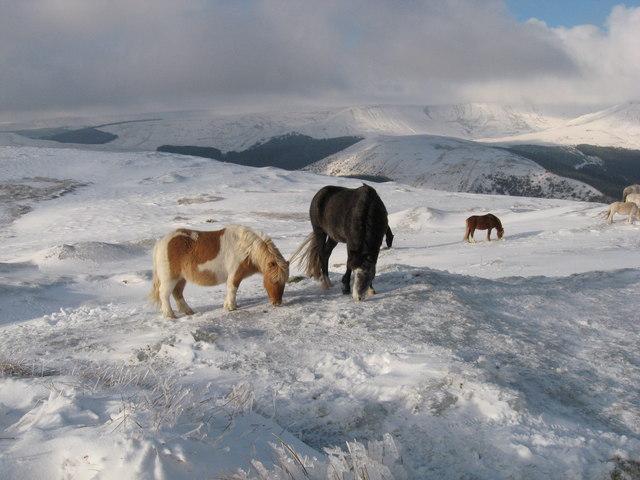 Horses on the summit