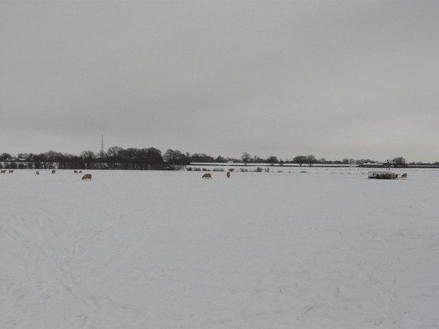Downland near Red House Farm