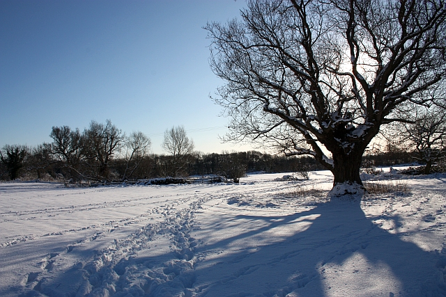 St Wulstan's Nature Reserve in the snow