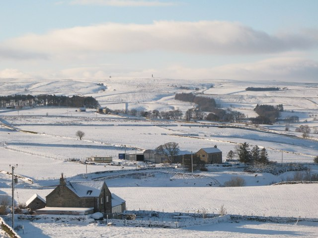 Snowy pastures southeast of Allendale Town