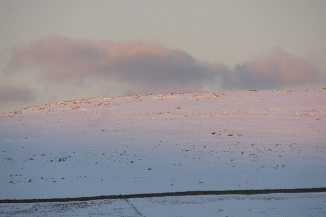 Crussa Field in the snow