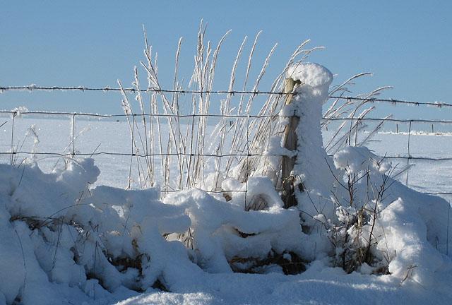 Snow on dead grass