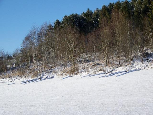 Woodland, Throope Bottom