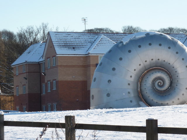 Giant snail reaches Chesterfield