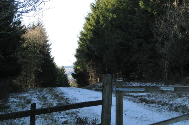 Forestry above Higher Ashton