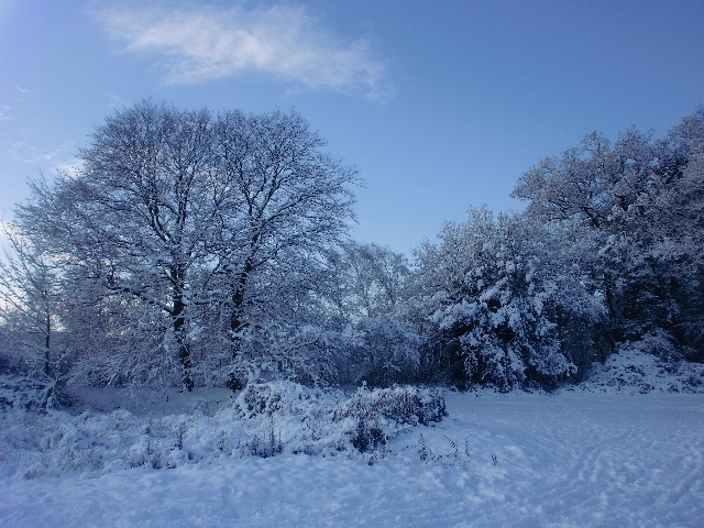 Trent Park, London N14 - in the snow