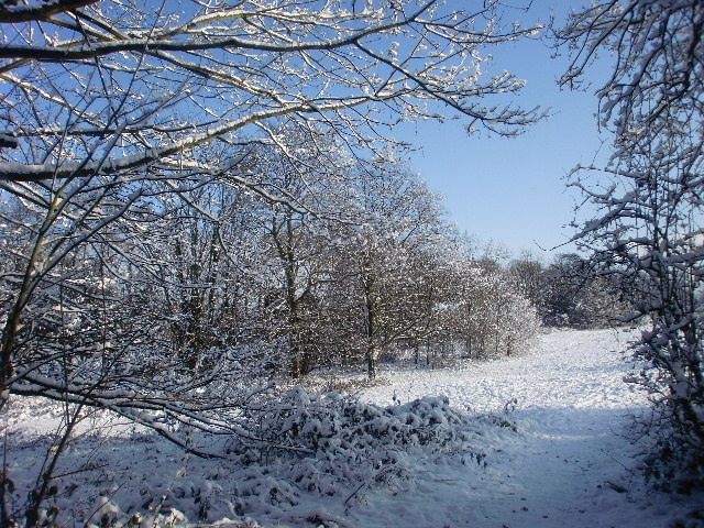 Winter wonderland in Trent Park, London N14