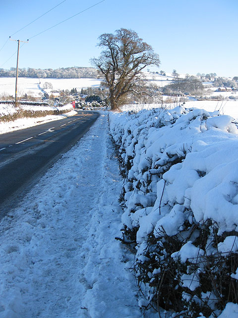 Snowy hedgerow by the A40, Lea