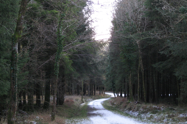 Forestry track approaching a junction, Great Haldon